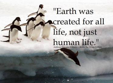 earthpenguins
